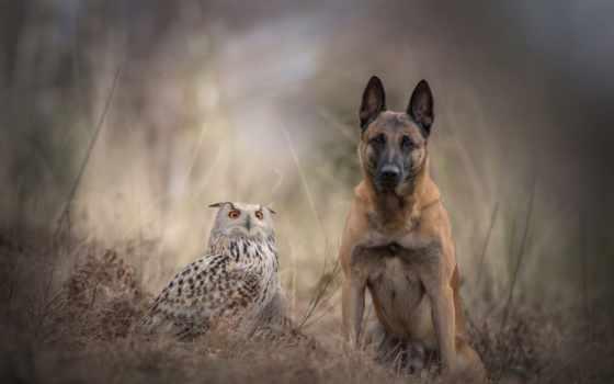 собака, природа, zhivotnye