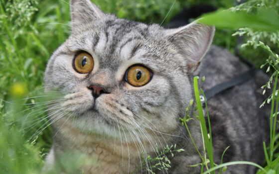 красивые, feline, кошки, широкоформатные, бесплатные, большие, кот, смотрит,