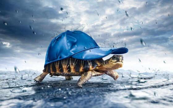 черепаха, кепке, под, креатив, дождем, кепка,