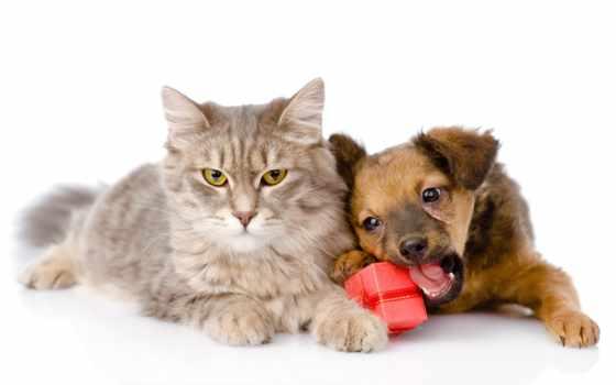 кот, щенок, собака