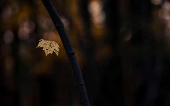 ствол, дерево, макро