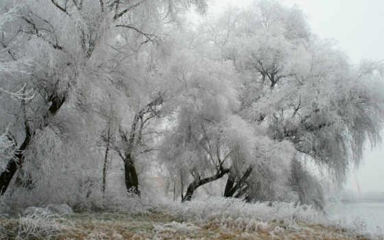 winter, снег, деревья Фон № 57034 разрешение 1920x1080