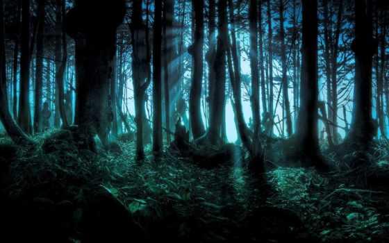 лес, scary, woods, лесу, pinterest, dark,