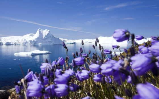 arctic, природа, world, снег, glacier, ocean,