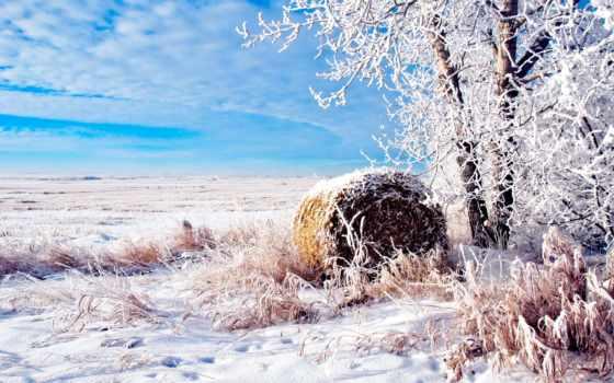 поле, winter, дерево, природа, снег, иний, булка,