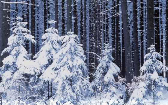 коллекция, winter, лес, большие, яndex, снегом,