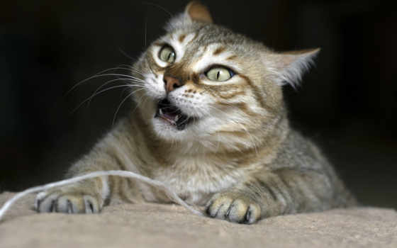 кот, cats, funny, grumpy, images, pictures, mobile, телефон,