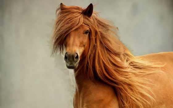 красивая, лошадь, взгляд