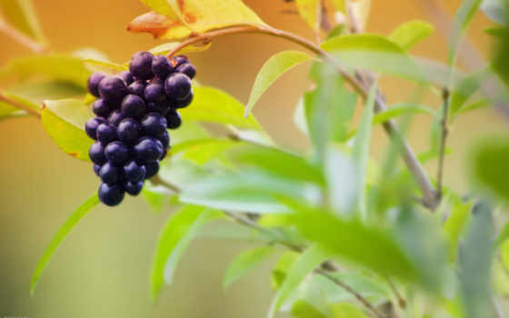 fruits, еда, free, you, плоды, можно, this,