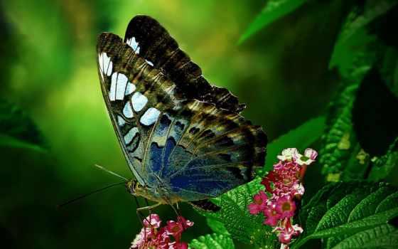 бабочка, цветы, love