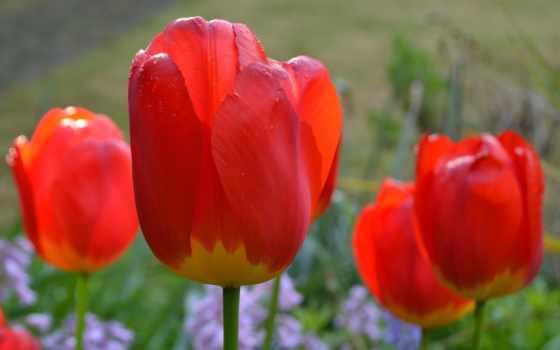 Цветы 93616