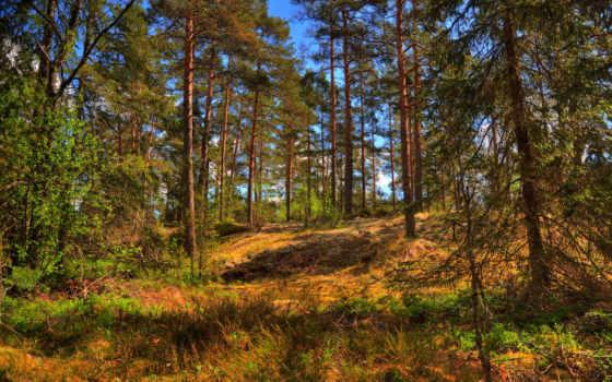 деревя, priroda, leto