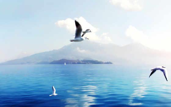 швейцария, seagulls, resolutions,
