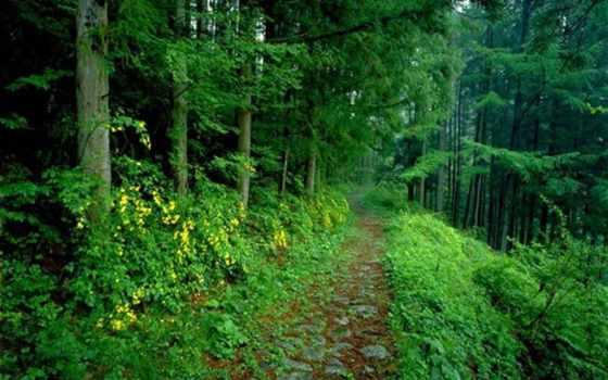 лес, summer, природа, леса, презентация, world, года, день, картинка, человека,