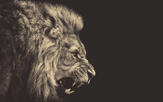 lion, quotes, об, strength, like, more, pinterest, see, strong,