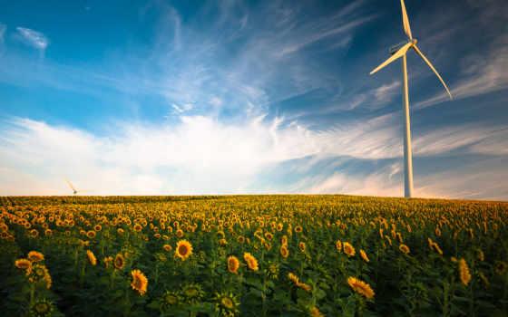 ветер, слово, поле, зелёный, подсолнух, energy, изображение, european,