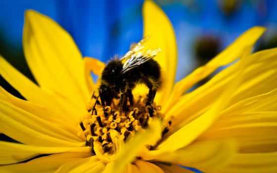 пчелка, views