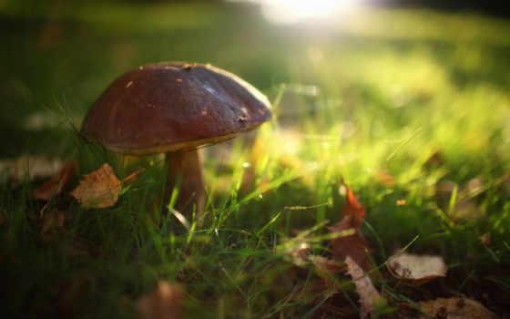 марк, desire, canon, карпаты, eos, mushrooms, one, iii, грибы,