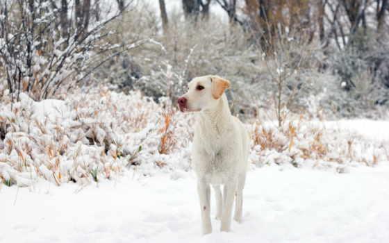 desktop, pictures, любой, winter, собака, они, забавные, собаки,
