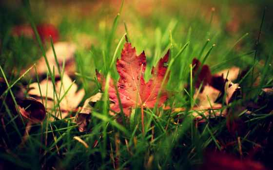 трава, листва, осень