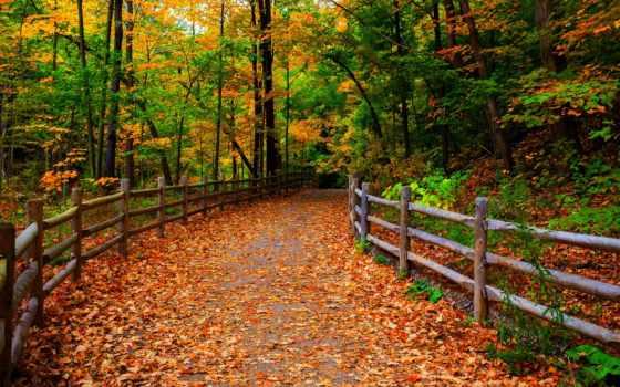 осень, забор, park, scenery, листья, trees, природа, дорога