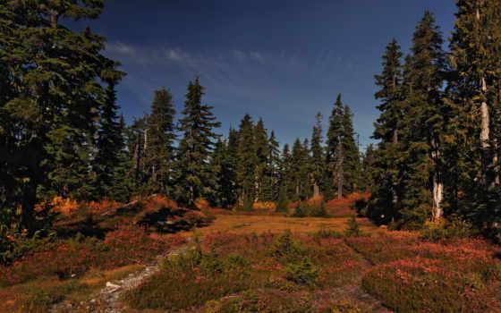 поляна, лес, hush, марта, природа, заставки, качественные, природой,