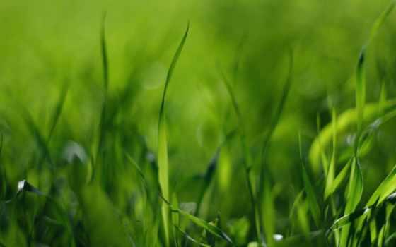 трава, страница, картинок