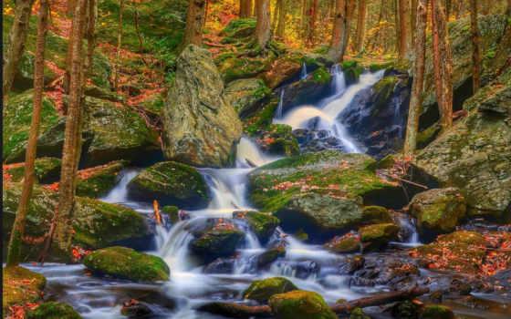 desktop, природа, лес