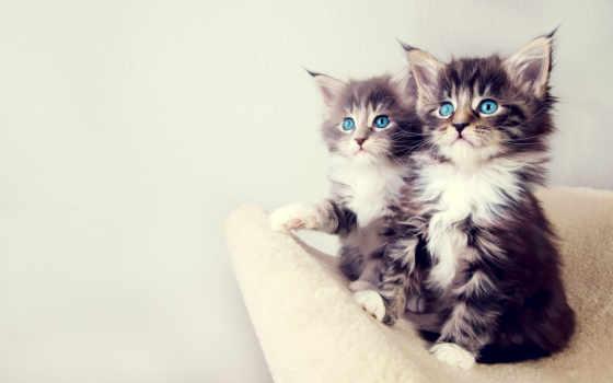 котенок, котята, изображение, кошки, small, кот,
