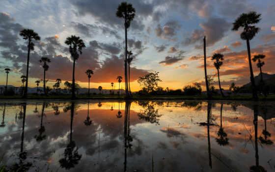 trees, отражение, закат, scenic, дерево, озеро, природа, пляж, palm,