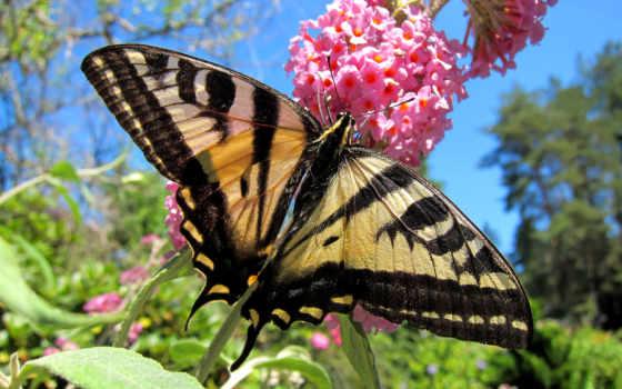 макро, позе, бабочка, imagini, цветы, мотылек, fluturi, природа, cu, животни,
