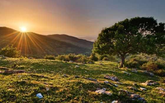 весна, sun, дерево, rays, природа, фоны, цветущее, закат, холмы,