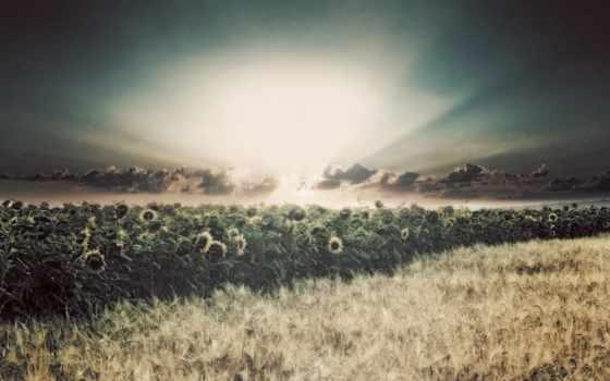 дождь, sun, подсолнухи, rays, поле,