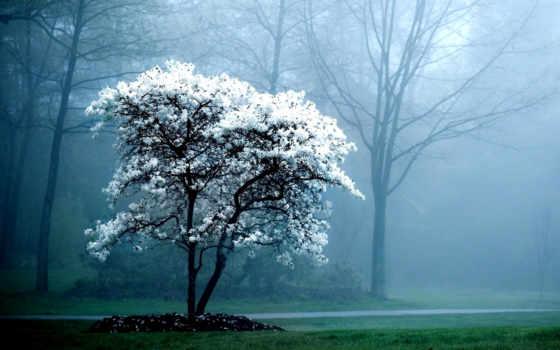 природа, дерево, весна, телефон, trees, туман, ветви,