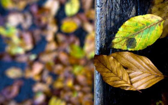 trees, сверху, дороги, margin, природа, осень,