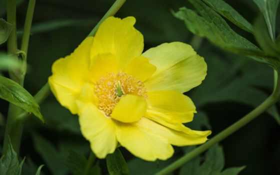 flora, cvety, молчишь, though, макро, посмотри, растения,