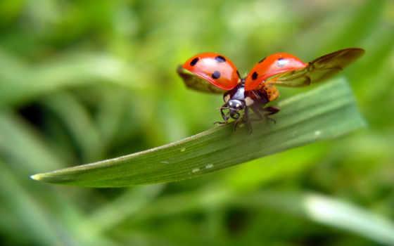 ladybug, flames, fire