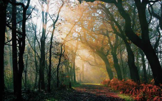 лес, утро, деревья