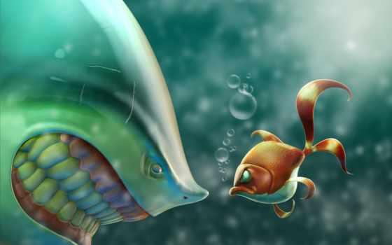 рыбка, art, рыбы, золотая, акула, ситуация, злость, kartinka,