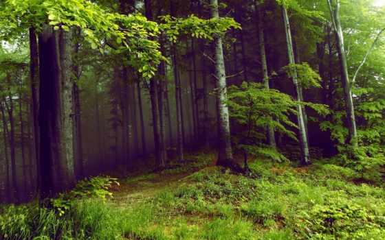 summer, природа, trees