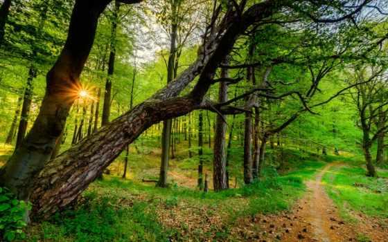 twitter, tweets, latest, trees, las, chaimaa, tapety,