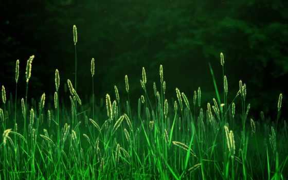 природа, лес, утро, поле, трава, rays, свет, колоски, колосья, свежесть,
