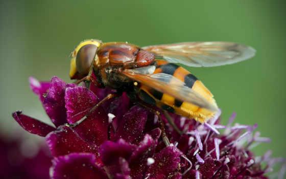 макро, цветы, природа, количество, пчела, светок,