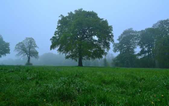медитация, музыка, зелёный, desktop, you, дерево, природа, focus,