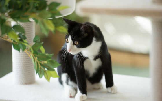 black, white, кот, чёрно,
