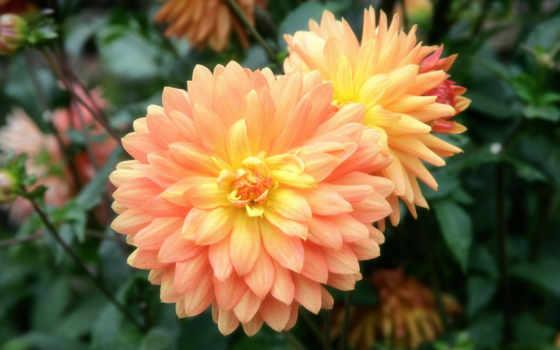flowers, flower