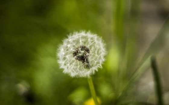 весна, цветы, природа Фон № 36867 разрешение 2560x1600