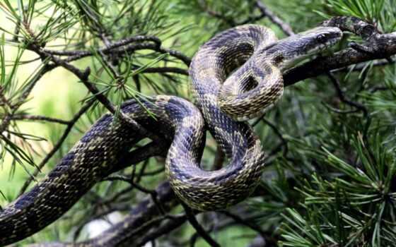 snake, змеи, коллекция