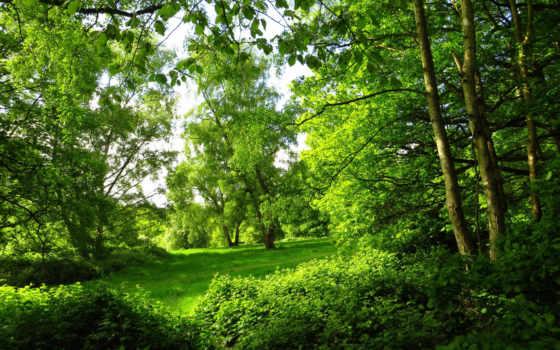 summer, park, картинка