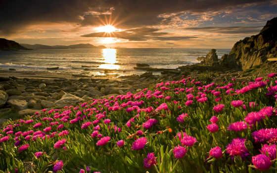 розовые, cvety, закат